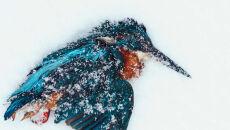 """""""Winter endings"""" Paul Klaver, Holandia - zwycięzca w kategorii """"nagroda specjalna"""""""