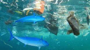 """Papież Franciszek: morza i oceany nie mogą być """"przestrzeniami pływającego plastiku"""""""